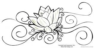 lotus drawing for website