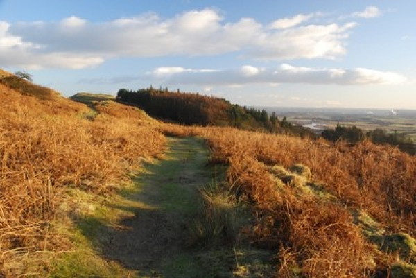 Footpaths on Dumyat : Understanding What's Happening