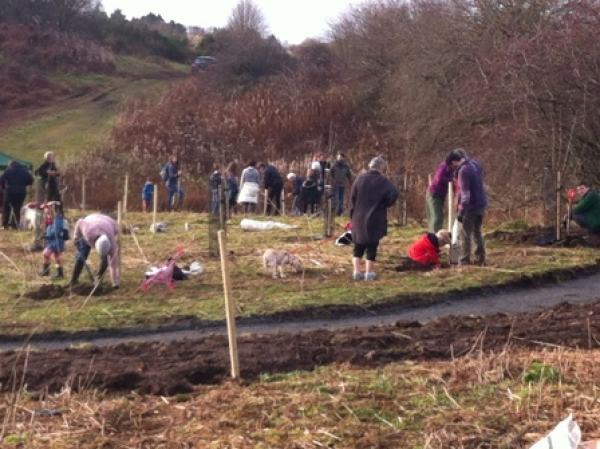 Dozens turn out to plant trees on the Laigh Hills